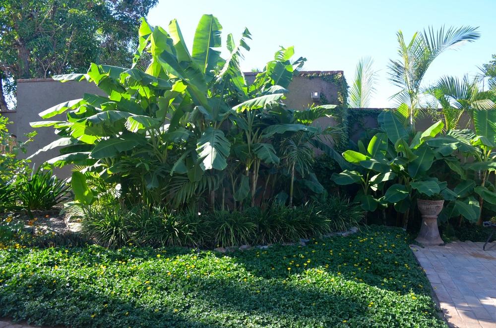 Lush Tropical Plantings