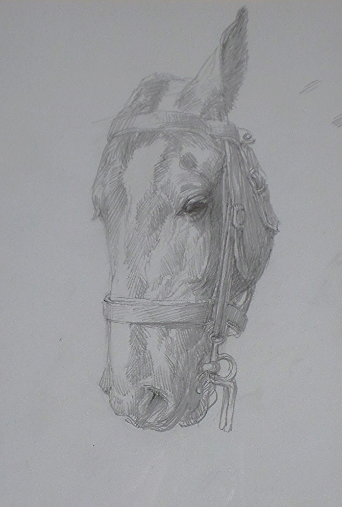 lucy kemp-welch  pencil sketch