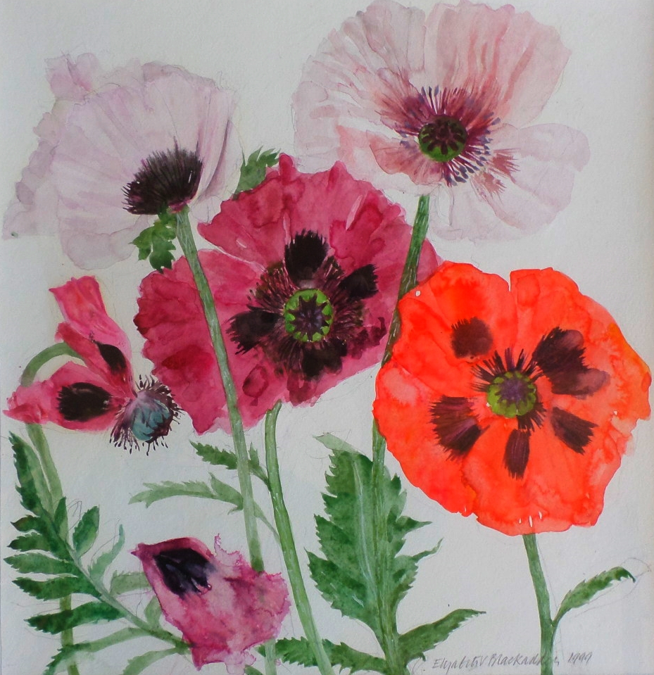 "Elizabeth Blackadder watercolour ""Poppies"""