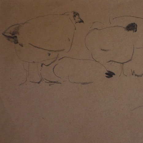 Pencil sketch - Hens