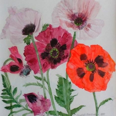 Poppies - Watercolour