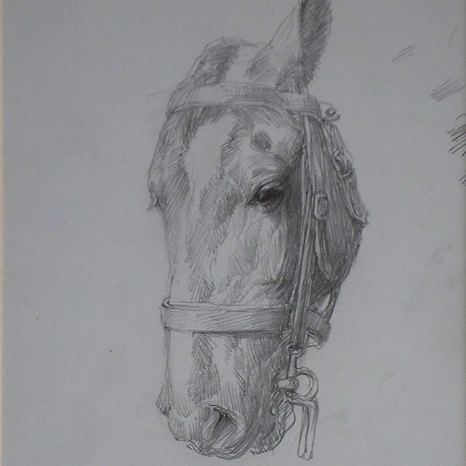 SOLD- Horse Head Sketch