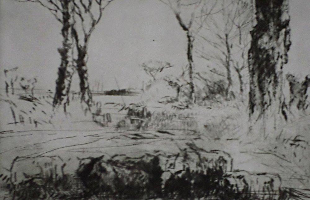 Sheep in Field Etching- Harry Becker