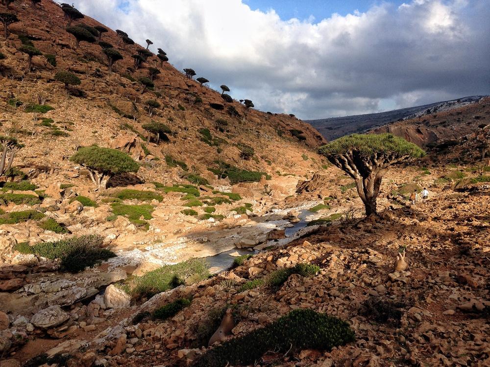 IMG_3240-Homhil riverbed (wadi).JPG