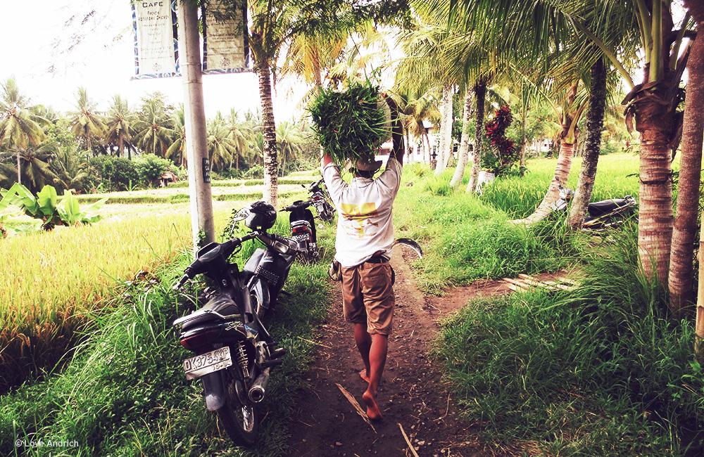 SpiritedPursuit_Bali2.jpg