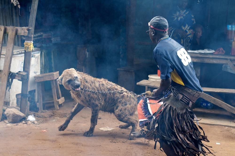 hyena perform.jpg
