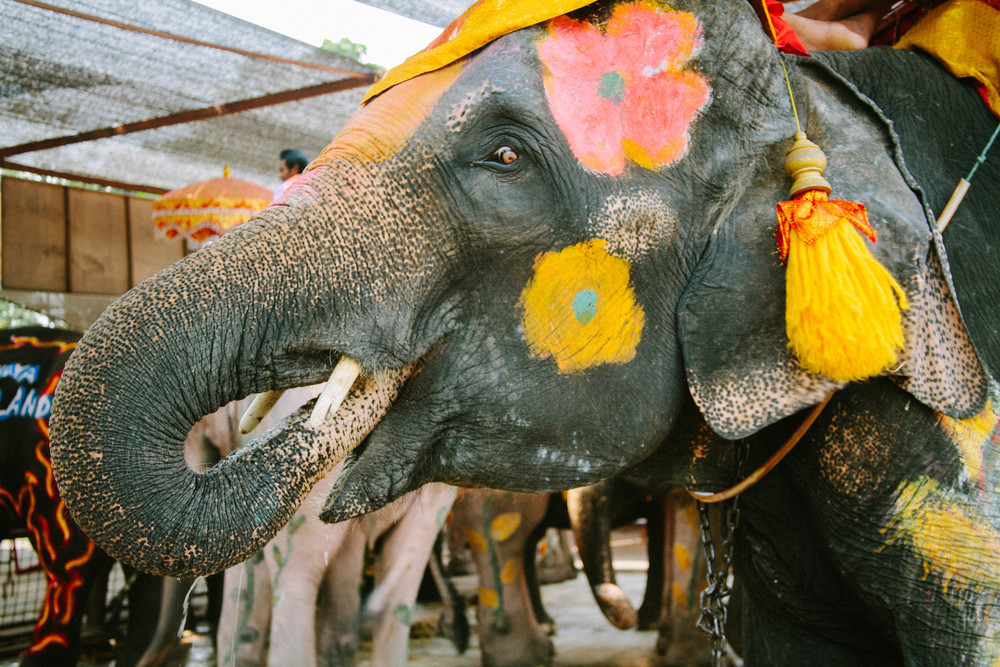 elephant thailand spiritedpursuit