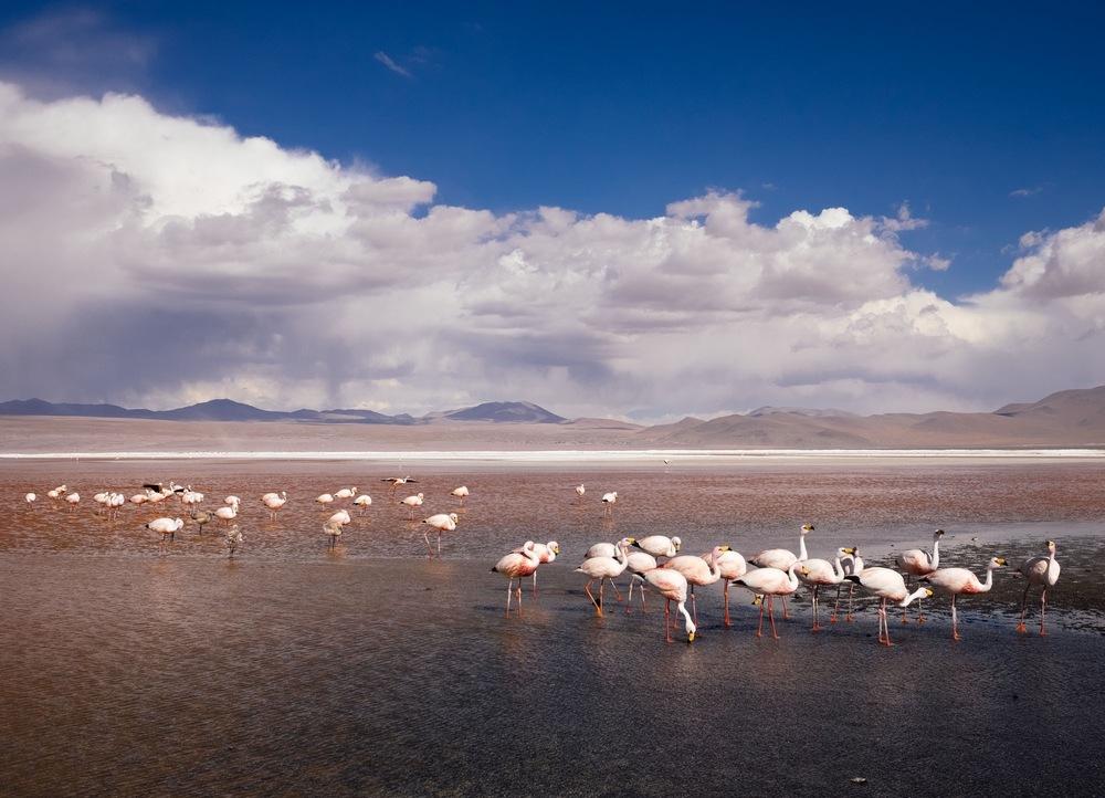JenniferEmerling_Bolivia_Southwest06.jpg