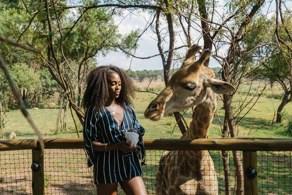 spiritedpursuit_leelitumbe_lionsafaripark-55.jpg