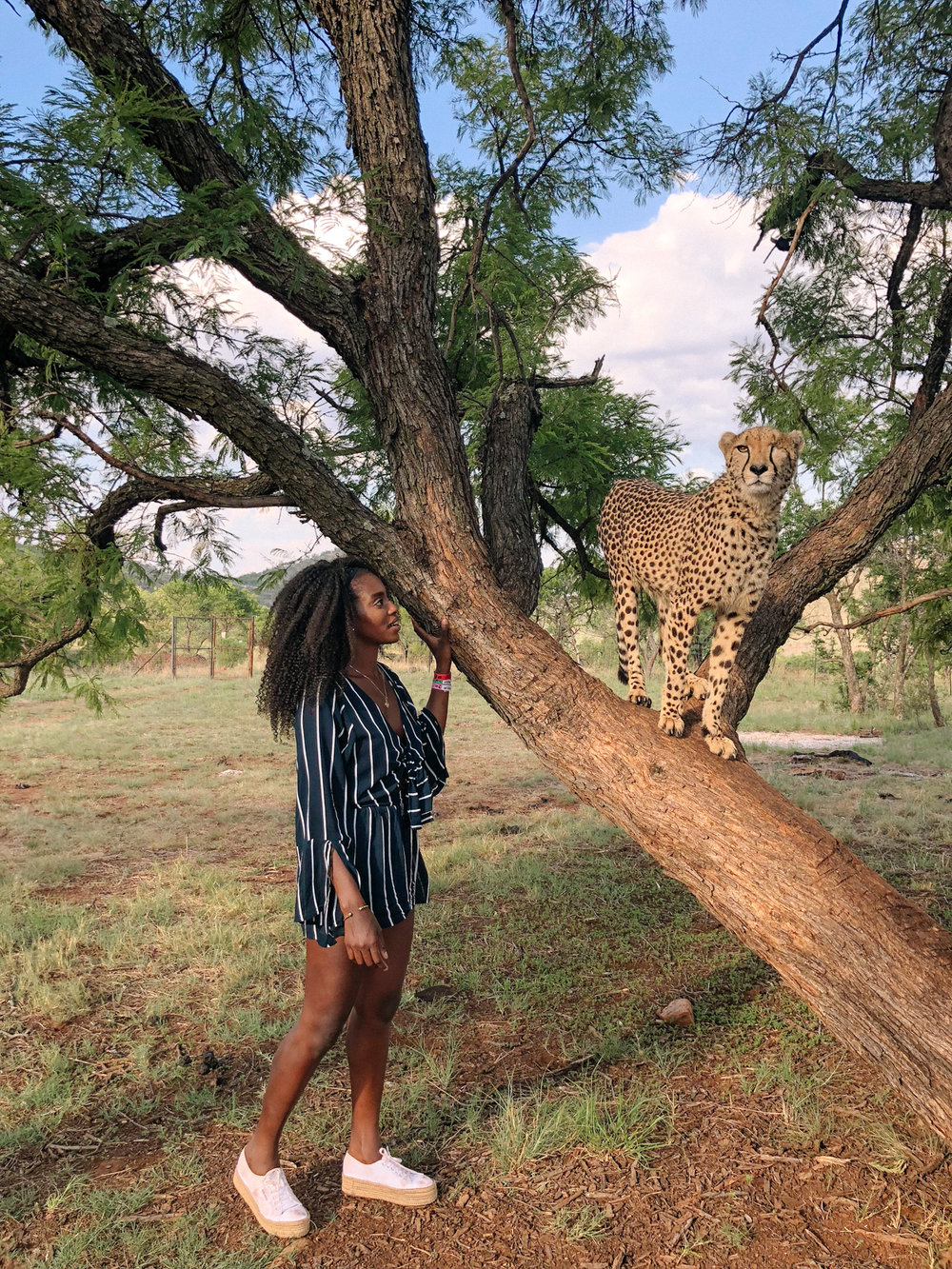 spiritedpursuit_leelitumbe_lionsafaripark-75.jpg