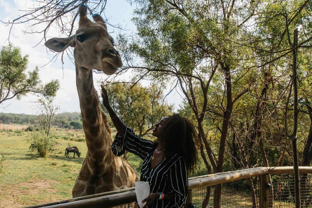 spiritedpursuit_leelitumbe_lionsafaripark-45.jpg