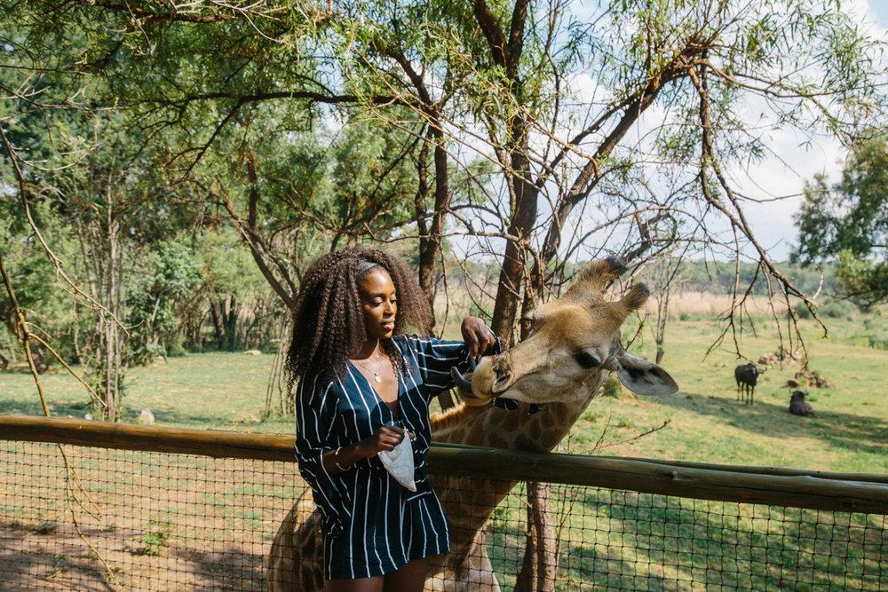 spiritedpursuit_leelitumbe_lionsafaripark-49.jpg