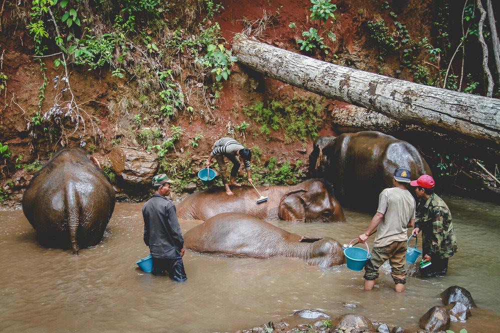 washing elephants vertical.jpg