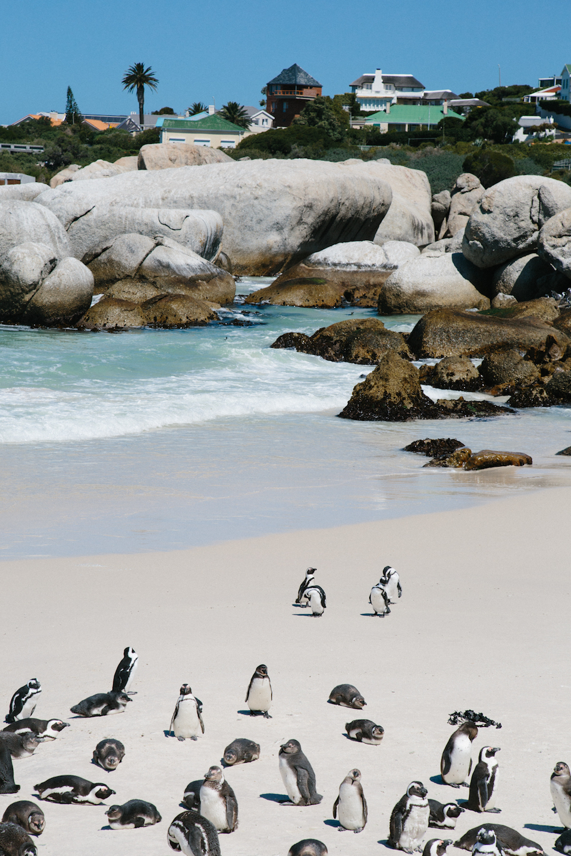 Spiritedpursuit_leelitumbe_capetown_southafrica-13.jpg