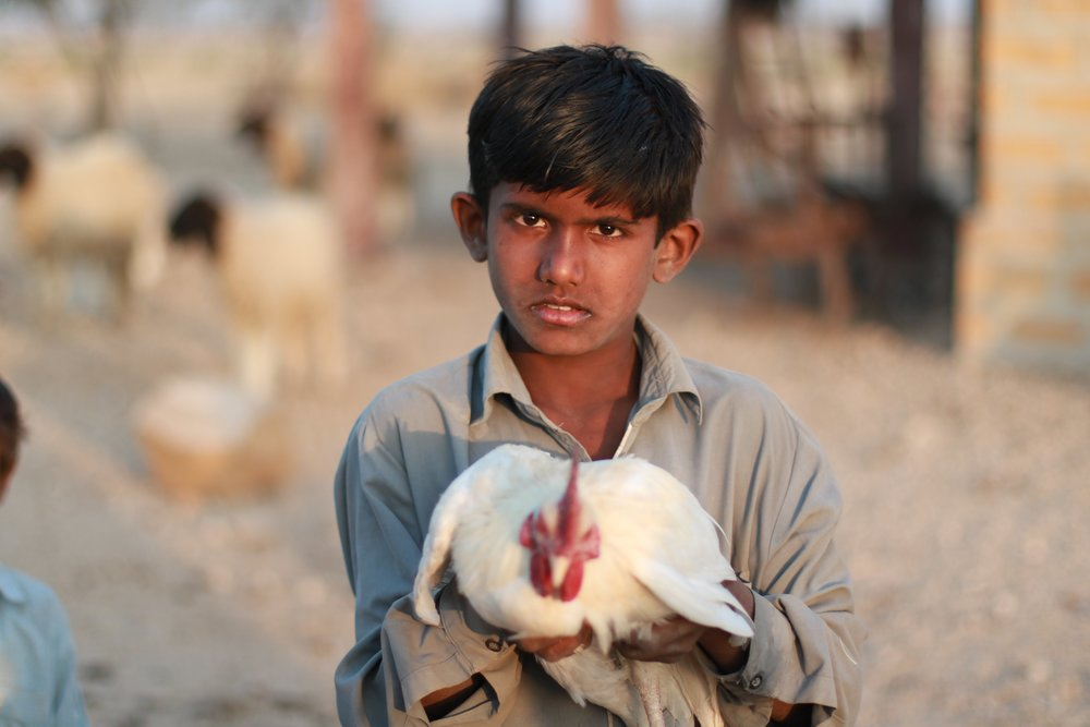 boy w chicken.jpg