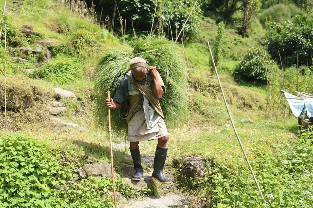 man carrying grass.jpg
