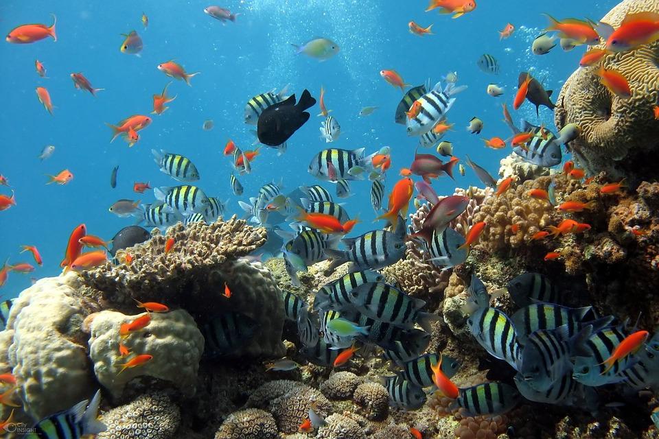fish-288988_960_720.jpg