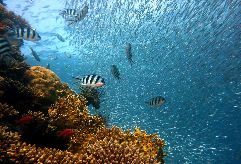 fish-378286_960_720.jpg
