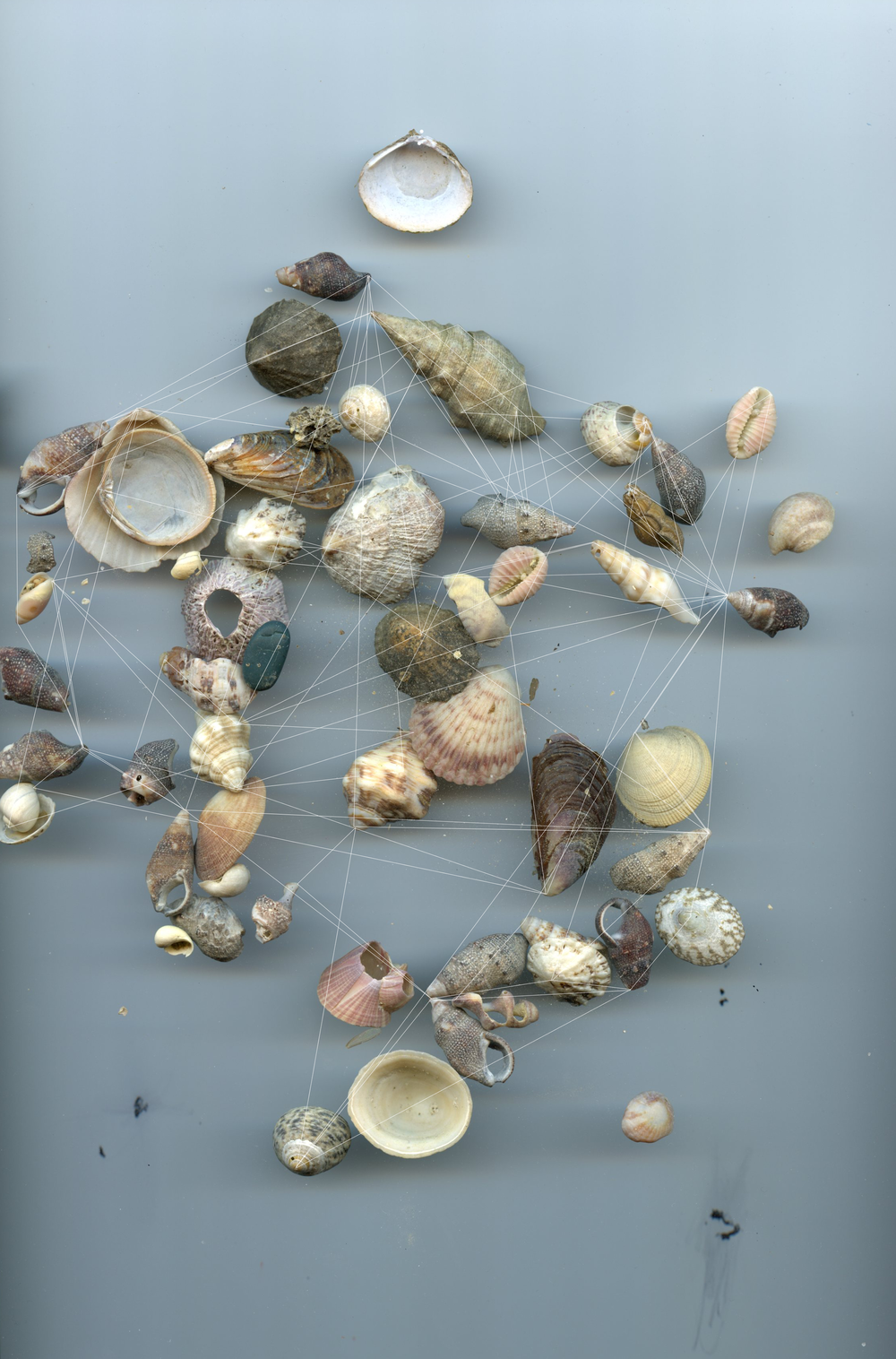 Seashells No.1 / Ocean Constellation No.1