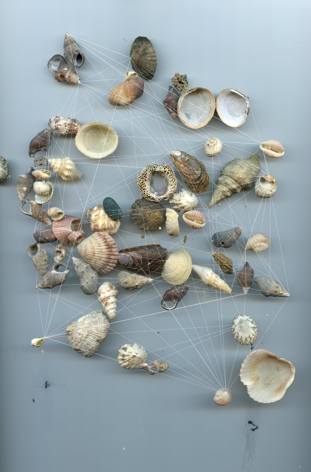 Seashells No 2. / Ocean Constellation No. 1