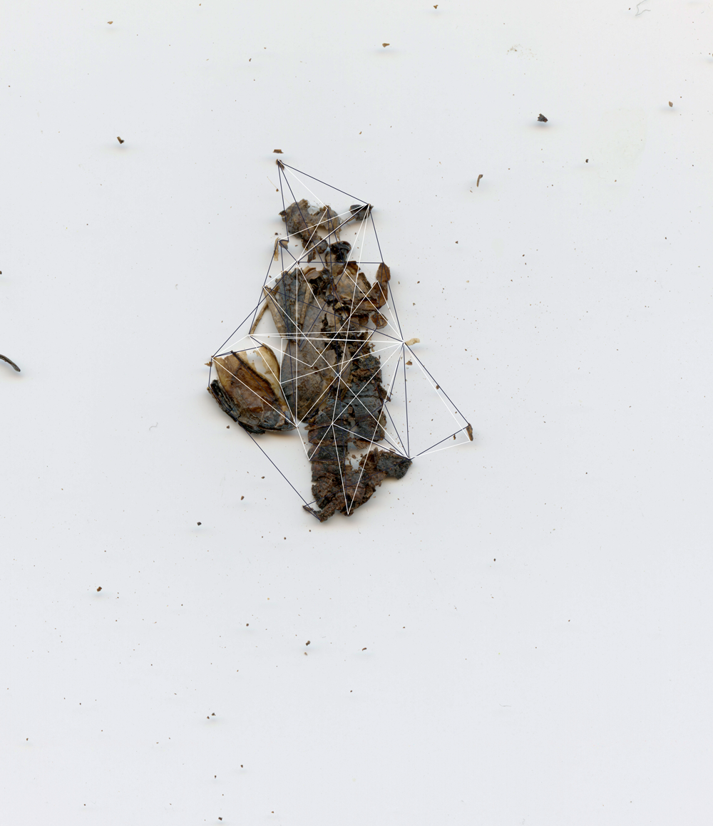 Crushed Chrysalis Constellation No. 1