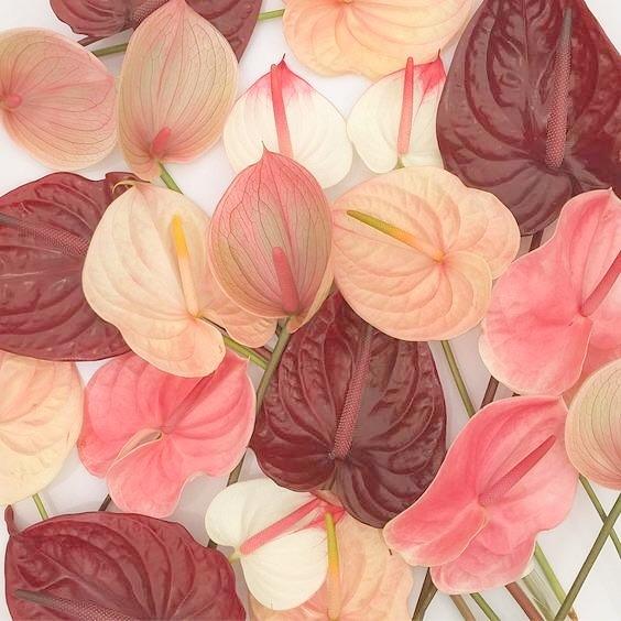 💕🌸 Floral Inspiration
