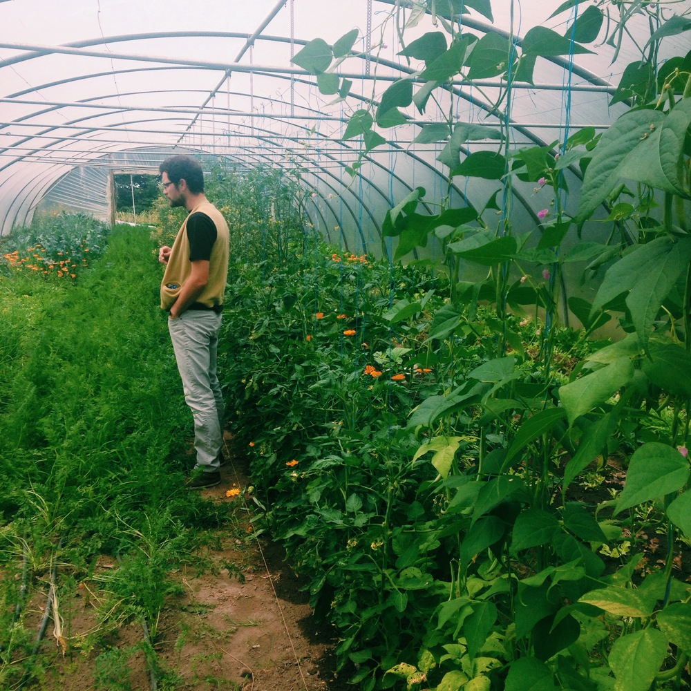 Dillisk Food Project, Greenhouse Fuinseog Farm