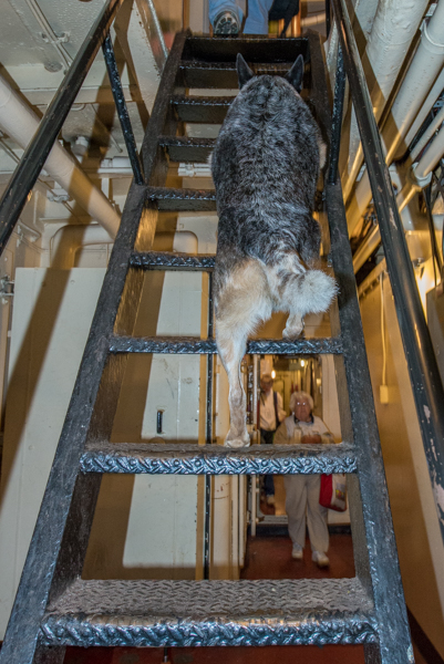 Easy peasy.  I do better on some of these than the humans do.  I can even do about 2-3 rungs on a vertical ladder.