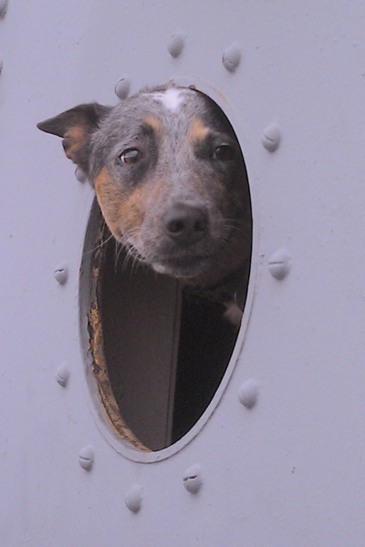 Not every dog gets to hang their head out of the 'window' of a WWII Liberty Ship when they go for a ride!