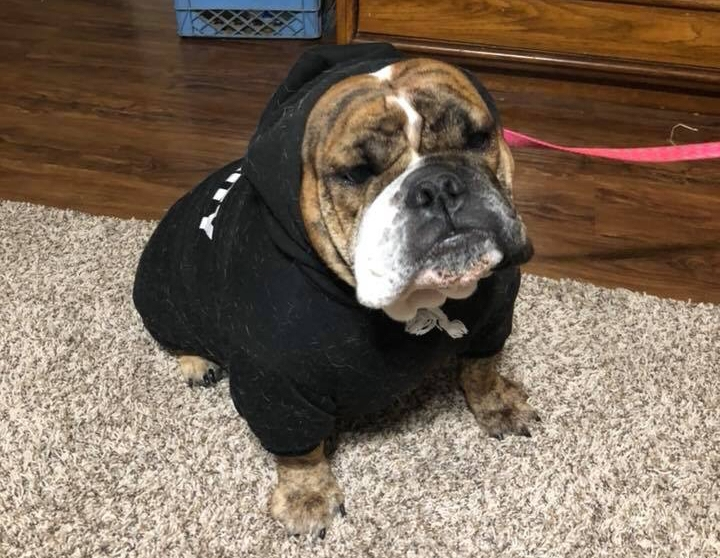 Did the slump hit because Matilda is gone?  Probably.  Look how great she is in her black hoodie!  #AllMatildaEverything.  By the way, I found out...  Matilda has her own Facebook Page !