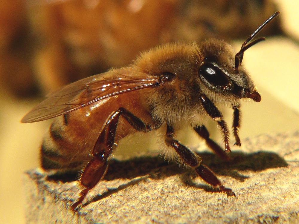 Worker Bee!