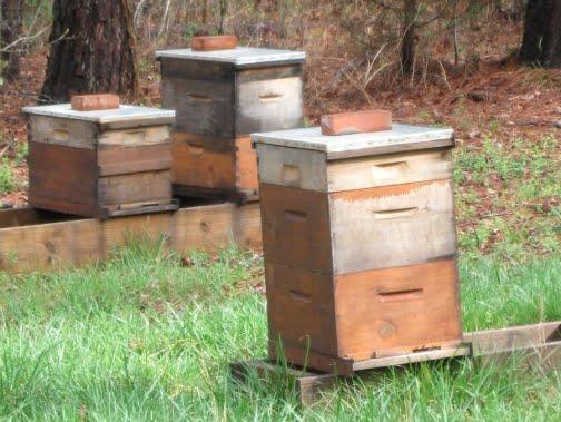 hives-spring.jpg