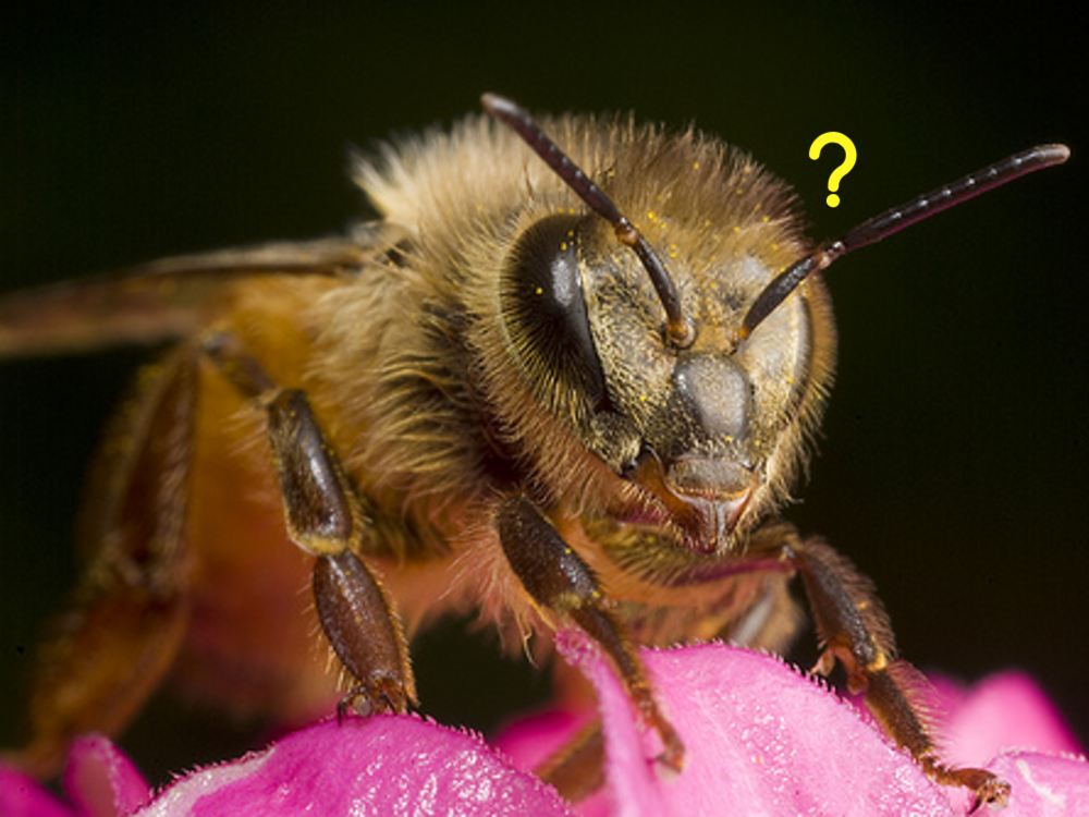 slide background - bee (question).png