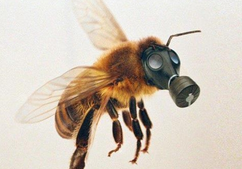 honey bee.gasmask.jpg