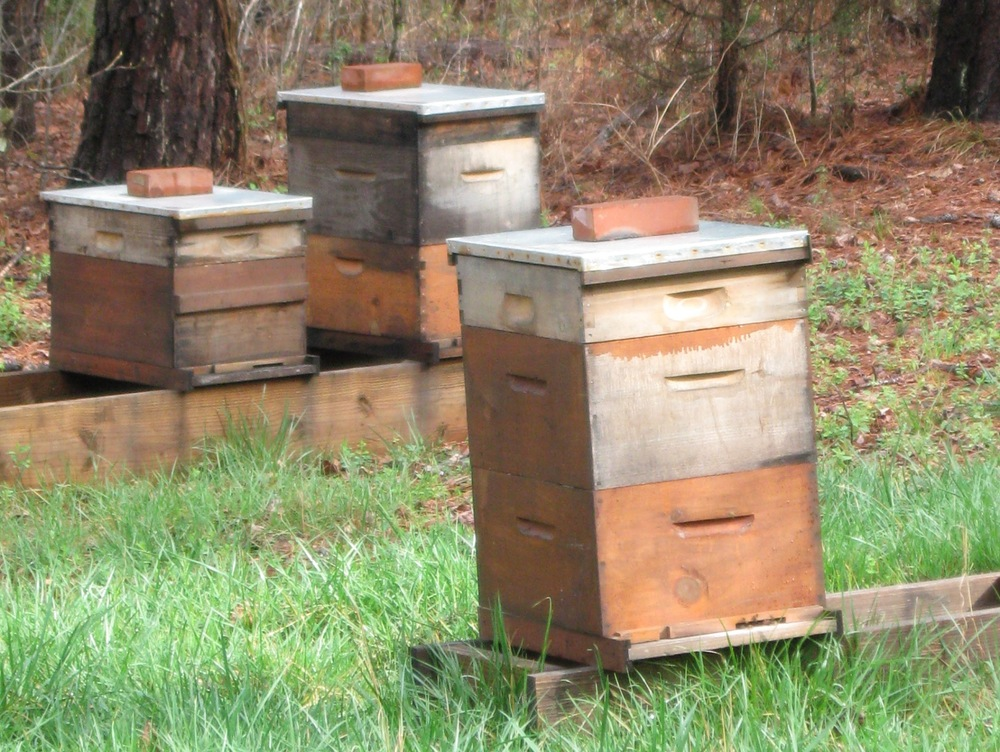 hives-spring-1.33ar.jpg