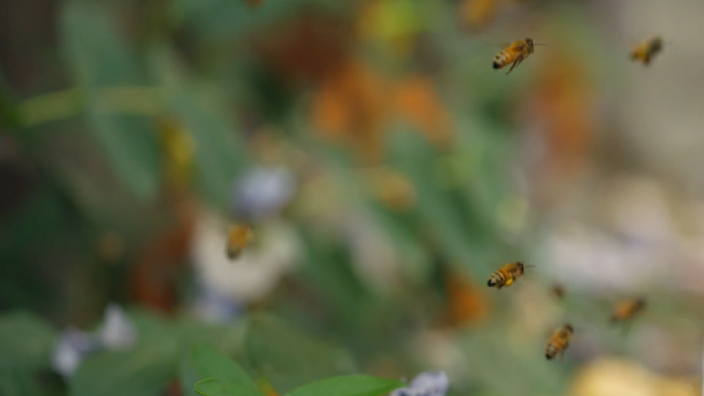 bees coming home.video still.00.png