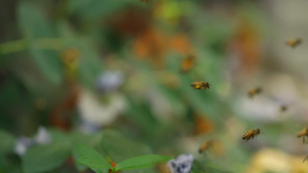 bees coming home.video still.04.png