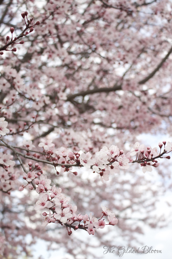 Plum Blossom Tree I gb.jpeg