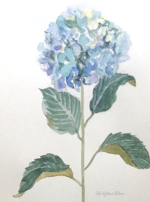 Blue Hydrangea Watercolor © The Gilded Bloom.jpeg