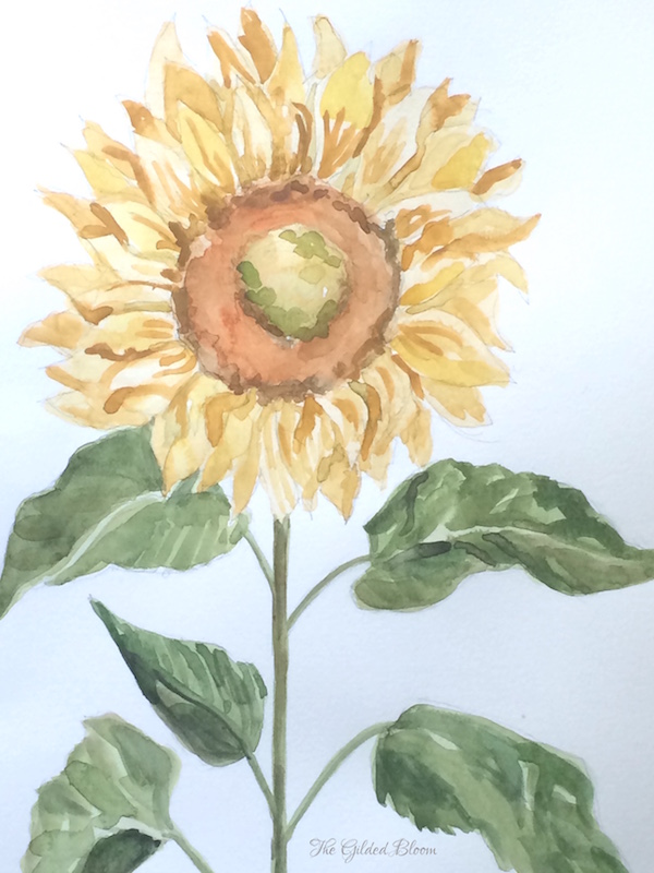 Sunflower Watercolor gb 600.jpeg