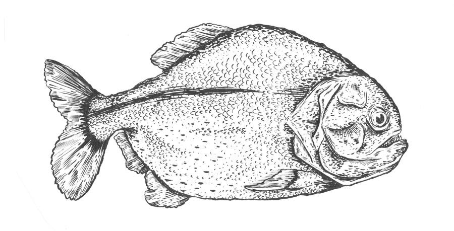 piranha-fish.jpg