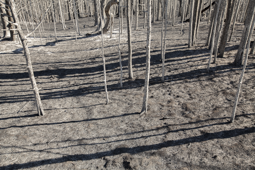 burned forest along the Niobrara River in Nebraska