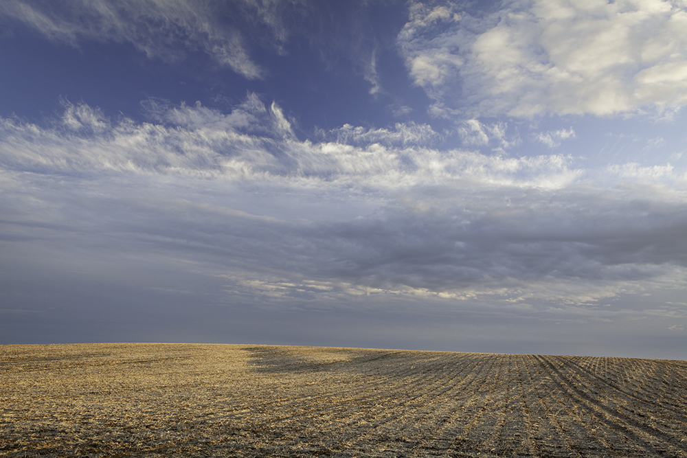 cornfield in eastern Nebraska