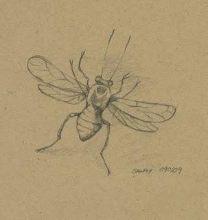Sawfly%C2%A9maryptraverse.jpg
