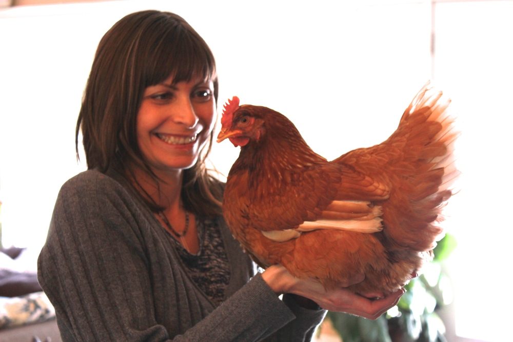 Eggs are 70% water, and our backyard chickens have thrived on Elmvale spring water.  Here I am with Marjorie, who always wants to sit on my hand until it gets tired.