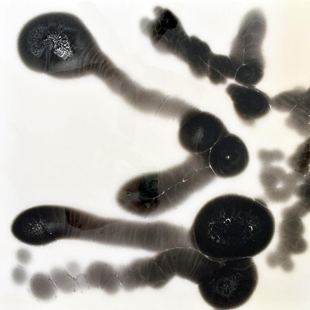 Petri Series I: 3