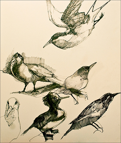 Journal Bird Studies