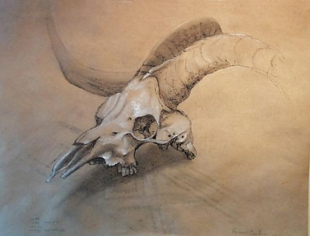 Andrea'sSkull.jpg