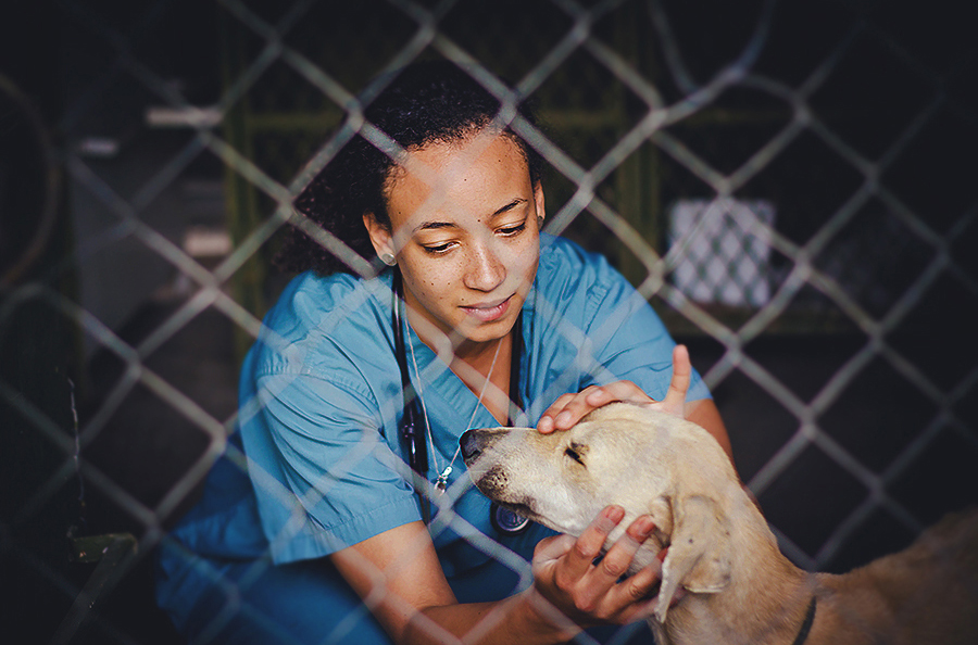 veterinarian in botswana treating dog, jennifer picard photography, travel photographer