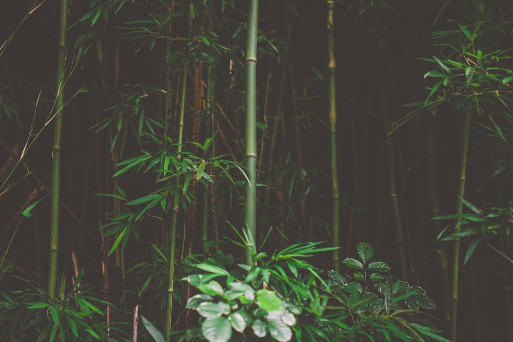 IMG_3317--KAUAI-HAWAII-JENNIFER-PICARD-PHOTOGRAPHY.jpg